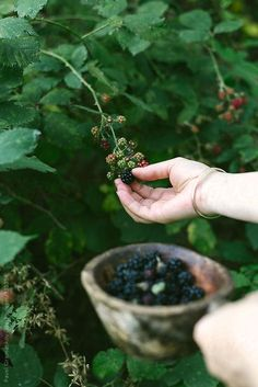 When picking a blackberry, the torus ('stem') does stay with the fruit. With a raspberry, the torus remains on the plant, leaving a hollow core in the raspberry fruit. Country Life, Country Living, Ivy House, Simple Pleasures, Garden Paths, Belle Photo, Blackberry, Raspberry Fruit, Farmer