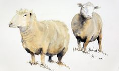 Sheep study watercolour painting