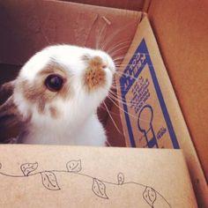 I smell carrots.