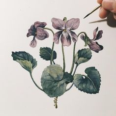 4,782 отметок «Нравится», 36 комментариев — Lily Seika Jones (@rivuletpaper) в Instagram: «Fun fact: The Violet was Napoleon Bonaparte's signature flower. His supporters could identify if…»