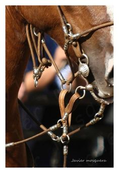 Foto Javier Mosquera Horse Bridle, Horse Gear, Secret Keeper, Tack Sets, Special Pictures, Headstall, Saddles, Horse Stuff, Scrapbooks