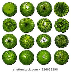 Similar Images, Stock Photos & Vectors of Trees - top view. Easy to use in your landscape design projects! - 134244833 - Similar Trees – top view. Easy to use in your landscape design projects! Images, Stock Photos & V -