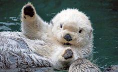 white-otter-says-hi-big
