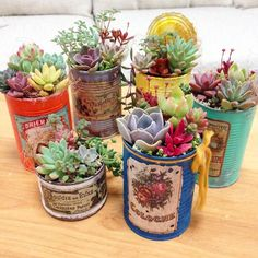 Beautiful succulents in old cans