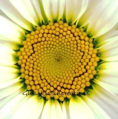 """Daisy - Fine art Photography Print 8 x 10"""". $15.00, via Etsy."""