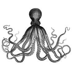 Antique Nautical Steampunk Octopus Vintage Victorian Kraken sea ...