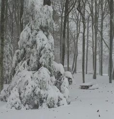 Jonathan Hellems from Nicholas County sent in this shot from the appropriately names Snow Hill/Fledger Ridge.