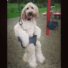 This super chill dude. | 23 Dogs On Swings Who Will Make You Say Weeee!