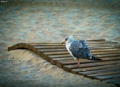 palavre:   Old Seagull  (via something-everything-nothing)