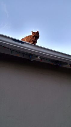 Now.....how do i get down from here?