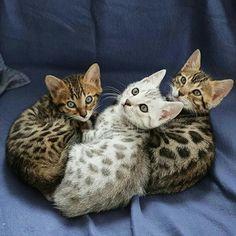 WOW! Que gatinhos linduuuuussss!!!
