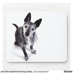 adorable mixed breed dog looking up mouse pad Best Friends Pets, My Best Friend, English Sheepdog Puppy, Funny Dog Jokes, Animal Jam, Mixed Breed, Dachshund, Dog Breeds, Dogs And Puppies
