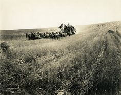 Horse drawn combine harvesting wheat in central or eastern Washington   Flickr - Photo Sharing!