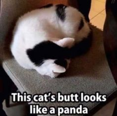 25+ Funny Cats You're Gonna Love #cats #kitty #kittens #memes