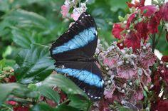 Butterfly House - Vienna Butterfly House, Vienna, My Photos, Animals, Animales, Animaux, Animal, Animais