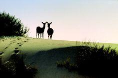 Ciervos en las dunas de Doñana