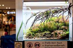 Aquarium Set, Tropical Aquarium, Aquarium Aquascape, Aquarium Ideas, Aquascaping, Tanked Aquariums, Freshwater Aquarium, Fresh Water, Tanks