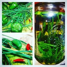 #love to #growyourownfood and enjoy the benefits? #healthyfamily #fun #homegrown #harvest #bellpeppers #chives #jalapenos dragon #cheyenne and #homemade garlic chive olive oil. #sustainable #wellness #health #selfreliance #homestead #nourish #heal #live healthy wellness