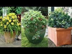20 perennial fruits & veggies