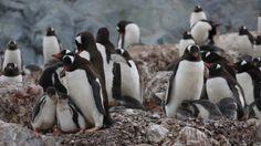 南極の魅力。|WORLD JOURNEY ★