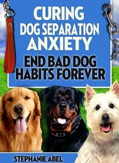 Curing dog seperation anxiety. #DogTraining