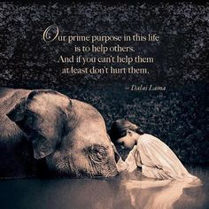 Our Purpose In This Life