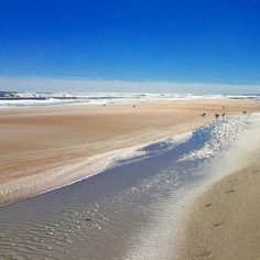 #beach #sand #water #waves #surf #atlantic #staugustine #florida #sky #beautiful #pretty #coastline #coast #view #landscape #scenery #nature #outdoors #outside #bright #sunny #glitter #sparkle #birds #gulls by susieandthedogs