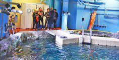 ... Public Aquariums on Pinterest Aquarium, Zoos and Georgia aquarium