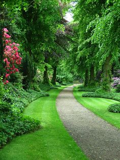 This collection of garden pathway ideas shows simple garden walkway applications from a modern garden to a older established creating a cohesive design. Privacy Landscaping, Garden Landscaping, Landscaping Ideas, Hydrangea Landscaping, Garden Shrubs, Lush Garden, Modern Landscaping, Beautiful Landscapes, Beautiful Gardens