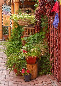 Old Town, Albuquerque, New Mexico Flora