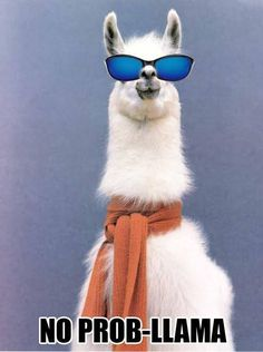 Image result for funny llama memes