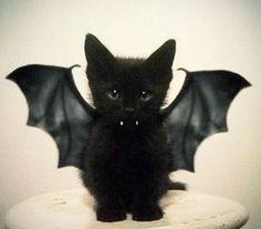 Halloween kitbat  @Nicole Agnes  ... baby Cleo