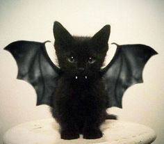 Halloween kitbat
