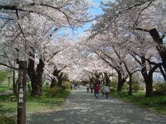 Iwate, Kitakami Tenshouchi(1)