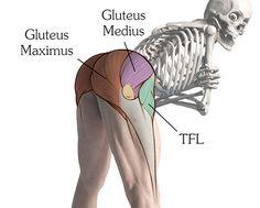Gluteus maximus, gluteus medius, and the tensor fasciae latae (TFL)