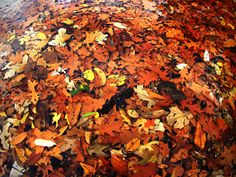 Leaves by MonkeyScarGraphics on Etsy #photography #poster #decor #beautiful