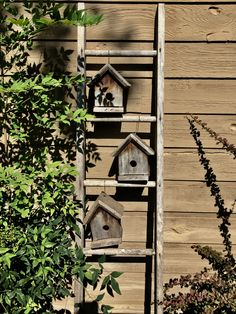 Birdhouse ladder! Elaine - find anther wooden ladder, take the rung back side, and do this for the Mentone porch - wrens are everywhere in that porch already; they might as well have real houses!