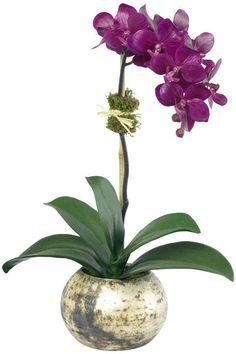 Diane James Home Very Violetta Floral Arrangement Flowers Floral Arrangements Purple Orchids