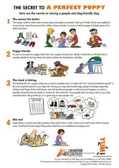 Useful Dog Obedience Training Tips – Dog Training Training Your Puppy, Dog Training Tips, Training Classes, Potty Training, Training Quotes, Training Pads, Training Online, Training Exercises, Cesar Millan Puppy Training