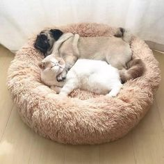 Buy Long Plush Super Soft Pet Bed Kennel Dog Cat Winter Warm Sleeping Bag Puppy Cushion Mat Cat Supplies at Wish - Shopping Made Fun Chat Donut, Shih Tzu, Cockerspaniel, Pet Odors, Pet Safe, Cute Kittens, Large Dogs, Small Dogs, Large Dog Breeds