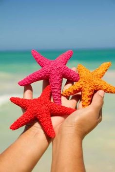 Colorful Starfish - how beautiful but they should be in the sea!
