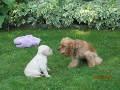 Harrison & Haley - the day I brought Harrison home.