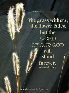 The grass withers, the flower fades... God's Word will stand forever— ~Isaiah 40:8