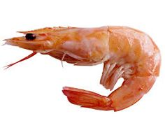Image result for shrimp