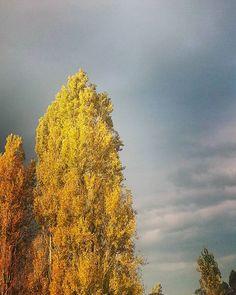 #Otoño #Autumn #amarillento #hojassecas #hojas #autumnleaves #leaves #yellowish #yellow #heaven
