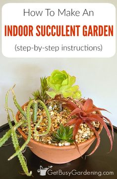 Miniature indoor succulent gardens are fun and easy to make. Follow these step-by-step instructions to create your own for you home, or to give as a gift.
