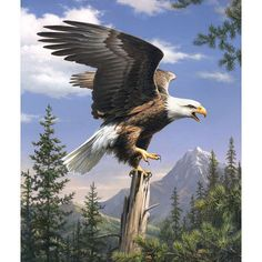 Reeves Paint By Number Artist Collection 9\u0022X12-Screaming Eagle,