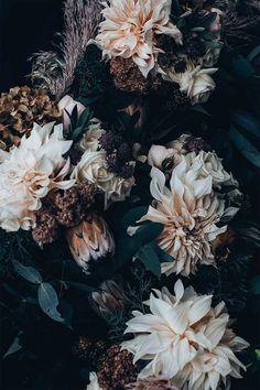Dark Flowers, Beautiful Flowers, Beautiful Beautiful, Flower Wallpaper, Wallpaper Backgrounds, Animal Wallpaper, Colorful Wallpaper, Black Wallpaper, Mobile Wallpaper