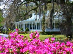 Just a typical view in Summerville, SC! -- Flowertown in the Pines -- Azaleas! -- Birthplace of Sweet Tea!