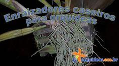 orquideas.eco.br-enraizadores